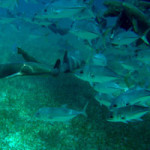 Belize Snorkel Tours